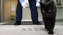Depuis deux ans, deux chats férus d'art tentent tous les jours d'entrer... dans un
