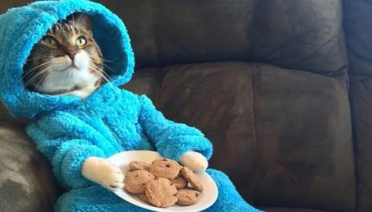 在豪アメリカ大使館から「猫のパジャマ・パーティ」の招待メールが届いて世界が衝撃