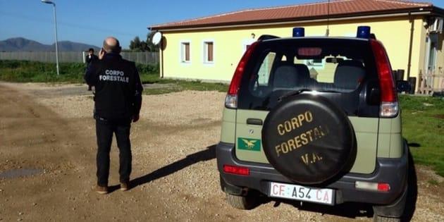 La riforma Madia continua a scricchiolare e ora rischia di perdere il pezzo pregiato: la Forestale