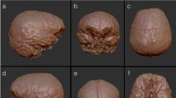 Des chercheurs ont reconstitué virtuellement le cerveau de Descartes, voici leurs