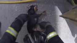 Los bomberos salvan a un perro inconsciente en un incendio en