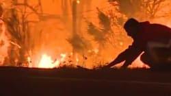 Cet homme a risqué sa vie pour un lapin effrayé par l'incendie qui ravage Los