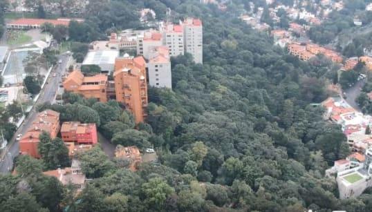 Autoridades avalan tala de 147 árboles en Álvaro Obregón para construir condominio de