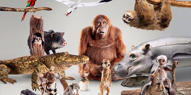 """Les animatroniques de la BBC pour le documentaire """"Spy in the wild"""""""