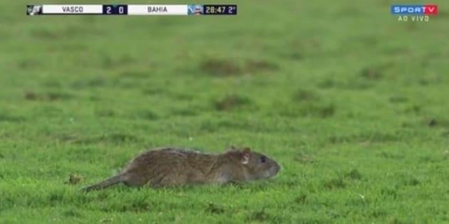 Rato invadiu campo no jogo entre Vasco e Bahia e virou atração na volta da Copa.
