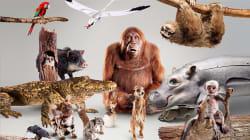 La BBC a fabriqué 30 robots-animaux pour filmer au plus près les animaux