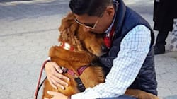 Cutest Dog Ever Gives Free Hugs To Strangers In New York