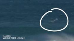 Un requin a fait une grosse frayeur aux organisateurs des mondiaux de