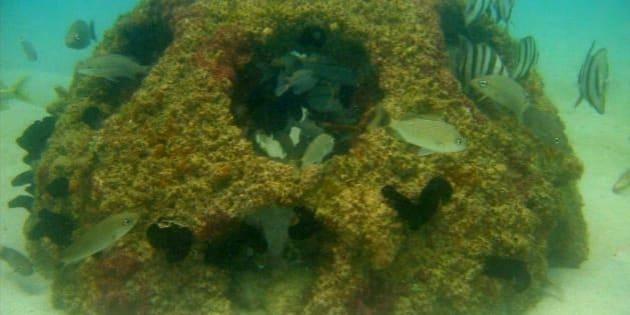 Vous pouvez devenir un récif commémoratif.