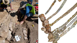 Dinosaur Bones Confirm Australia's Newest Prehistoric Animal