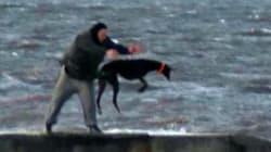 Un homme jette un lévrier anglais dans une mer