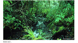 スマトラ島のパーム油生産農園、RSPO認証の本審査を実施