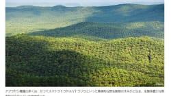 スマトラ島の森を守る、パーム油の小規模農家支援