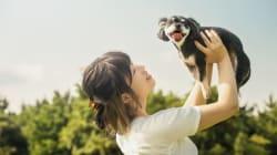 今、ペットビジネス市場があつい。ペット保険や飼い主とのマッチングサービスが登場