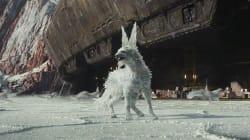 On connaît le nom de ce renard de cristal qui fait son apparition dans