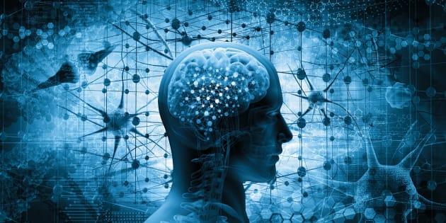 Une injection de cette hormone dope mémoire et capacité motrice