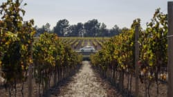Ruta ecológica sobre ruedas por los viñedos de