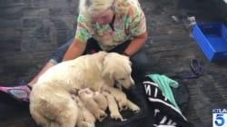 介助犬が空港内で8匹の子犬を出産。消防本部の手伝いで「無事、誕生!」