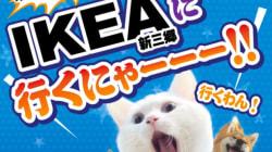 IKEAが保護犬・猫の譲渡会を初めて開催。ペットのいる暮らしへ