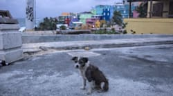 Puerto Ricans Are Struggling To Flee The Island With Their