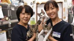飼い主のいない猫や犬に無料で不妊手術。受け入れ拡大へ資金募る。「殺処分ゼロの社会に」