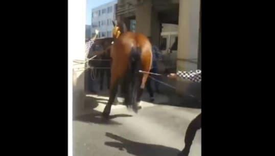 """藤崎八旛宮の例大祭で馬虐待か。ムチ打ちして""""後ろ蹴り""""させる動画が拡散"""