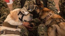 FOTOS: Frida, Eco y Evil inauguran festival canino en