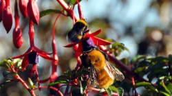 ミツバチの羽音の広がり