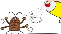 ゴキブリは「1匹見つけたら100匹いる」は本当か?
