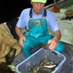 琵琶湖に異変? 外来魚「おらんな、ほんまおらん」