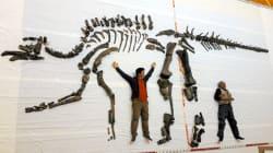 むかわ竜、化石も強い 北海道地震で保管庫倒れても無事