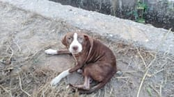 Un perro sin dueño cuida toda la noche de un anciano con alzheimer perdido en