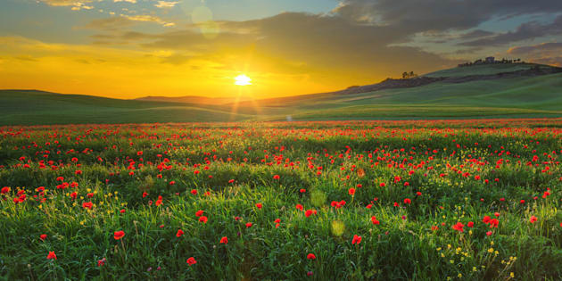 Scenic view in Val d'Orcia at sunset