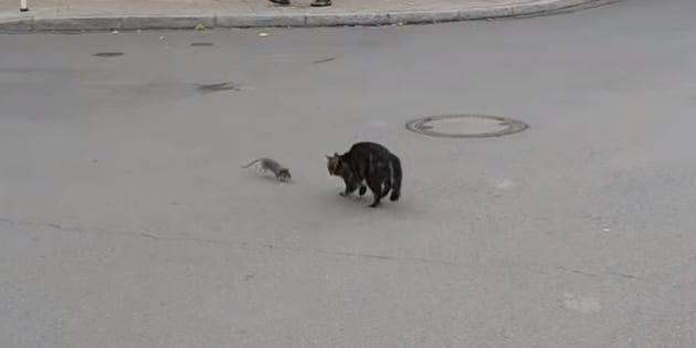 Cette poursuite entre un chat et un rat n'est pas sans rappeler le dessin-animé Tom et Jerry.