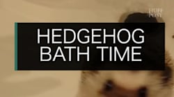 Aw! Its Bath Time For A
