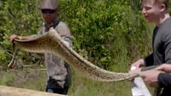 Gordon Ramsay tue un python et en fait des