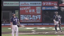 Dans ce match de base-ball japonais, ce sont les oiseaux qui ont