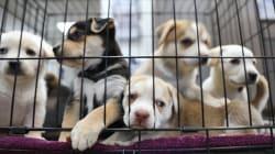 La Californie interdit aux animaleries de vendre chiens, chats et lapins non issus de