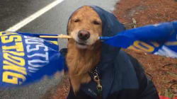 Pendant le marathon de Boston, les coureurs ont pu compter sur un supporter