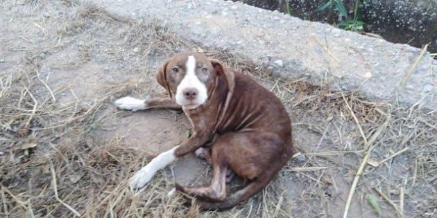 El perro que acompañó al anciano con Alzheimer, en una imagen difundida por el Consistorio.