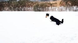 Check Out All These Dogs Loving The Crazy Cold Weather In