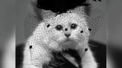 La gatta di Karl Lagerfeld in veletta nera ringrazia tutti per le
