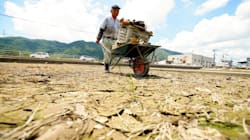 「今年はもう米は無理だな」西日本豪雨で水田も大きな被害
