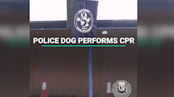 Police Dog Performs CPR On