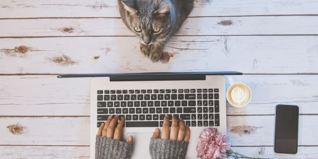 Girl with a cat working at home.