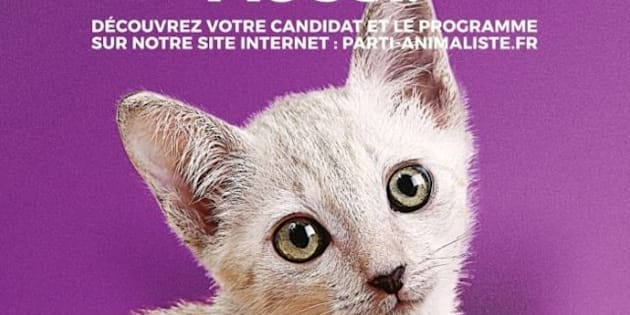 Les chatons, stars d'Internet et des affiches du parti animaliste aux législatives 2017.
