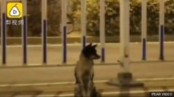 In Cina un cane ha aspettato per 80 giorni il padrone morto in