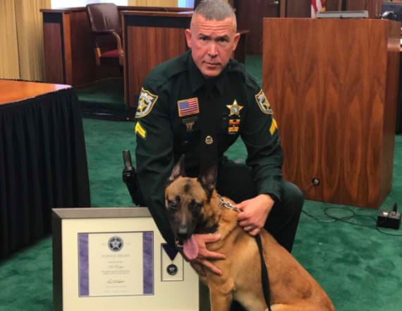 K9 given 'Purple Heart' for saving partner's life