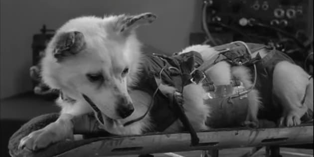 La perra Laika fue el primer animal en salir al espacio y orbitar la Tierra.