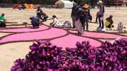 Así se construye la gigantesca alfombra de flores en el Monumento a la